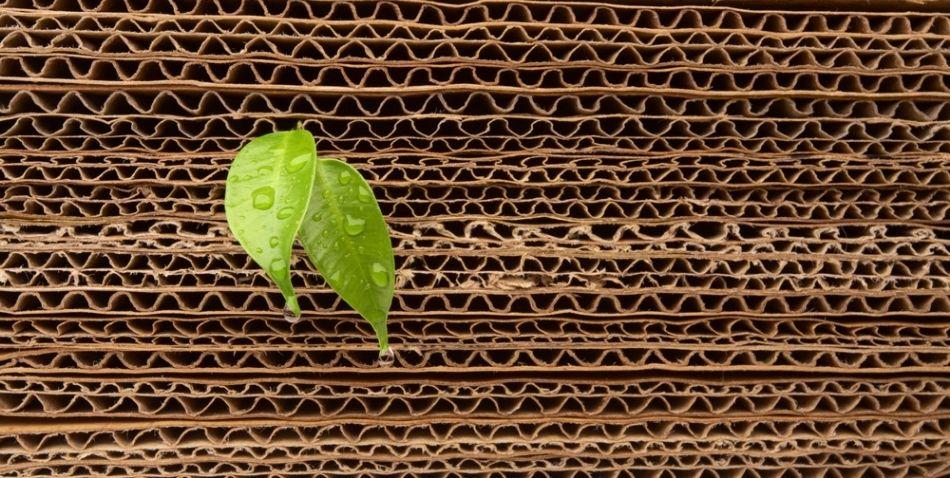 cartón ecológico para envases reutilizables